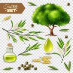 TEA TREE OIL: ADVANTAGES AND USES FOR HEALTH